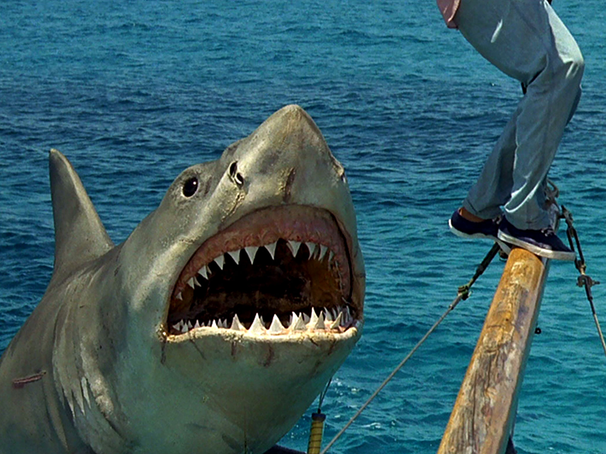In defence of Jaws: The Revenge