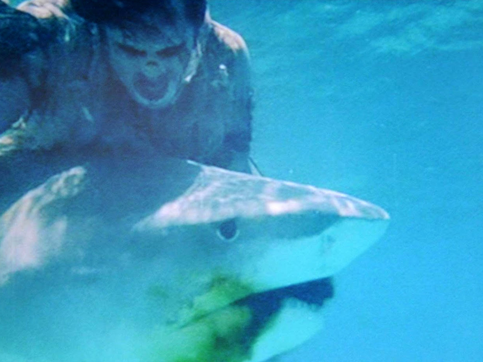 The insane story of Zombi 2's notorious shark fight scene