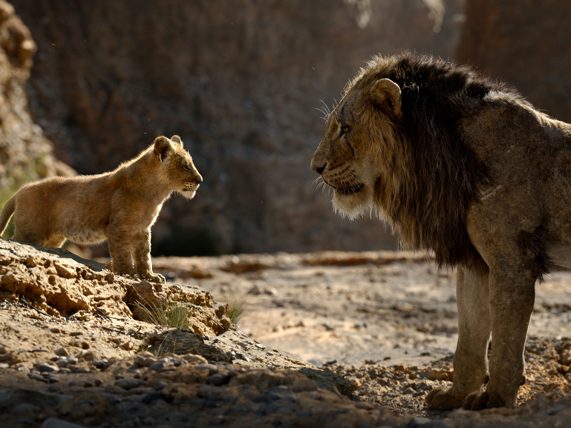 the-lion-king-simba-scar - Little White Lies