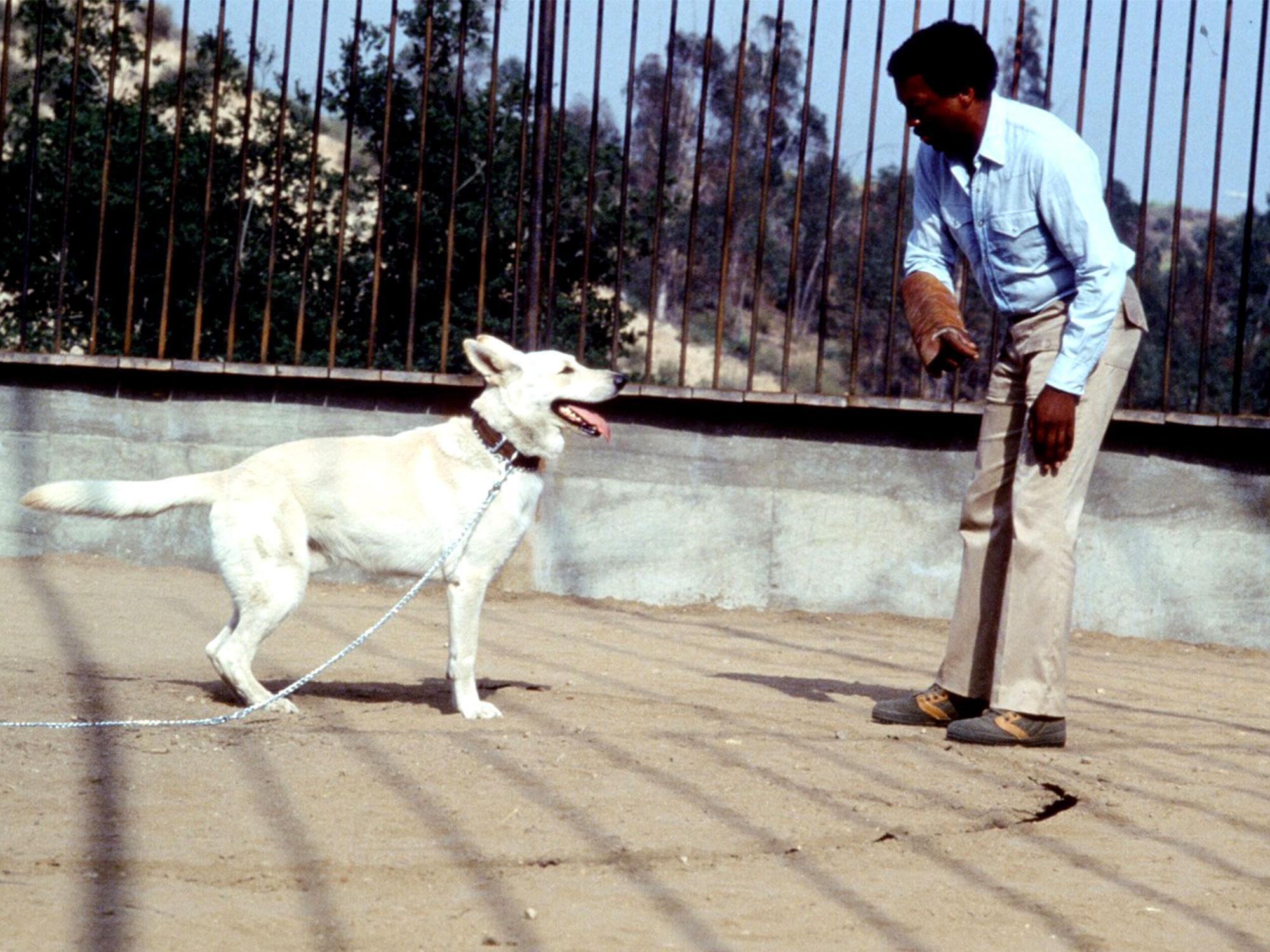 Paul Winfield in White Dog (1982)